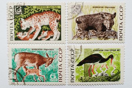 postage stamps: UZHGOROD, UKRAINE - CIRCA MAY, 2016: Collection of postage stamps printed in USSR shows different wild animals from Bialowieza Forest or Belovezhskaya Pushcha (Belarus), circa 1969 Editorial