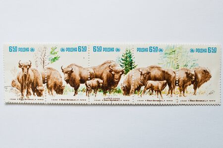 philatelist: UZHGOROD, UKRAINE - CIRCA MAY, 2016: Collection of postage stamps printed in Poland shows zubr bull bison, circa 1981