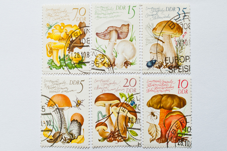 republik: UZHGOROD, UKRAINE - CIRCA MAY, 2016: Collection of postage stamps printed in Deutsche Demokratische Republik (DDR), shows mushrooms series, circa 1980