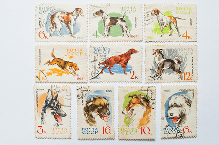 philatelic: UZHGOROD, UKRAINE - CIRCA MAY, 2016: Collection of postage stamps printed in USSR shows different types of dogs, circa 1965 Editorial