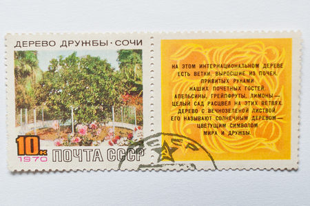 citrus tree: UZHGOROD, UKRAINE - CIRCA MAY, 2016: Postage stamp printed in USSR, shows Friendship Tree, unique citrus tree, Sochi, Russia,  circa 1970 Editorial