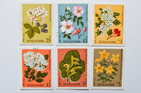 postage stamps: UZHGOROD, UKRAINE - CIRCA MAY, 2016: Collection of postage stamps printed in Bulgaria, shows different herbal flowers, circa 1981