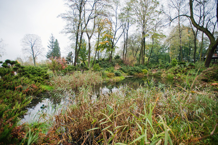 back yard pond: A garden small pond with shrubs and lush vegetation