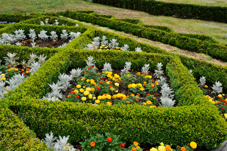 diamond shaped: Flowerbed shaped diamond form at garden with marigold flower