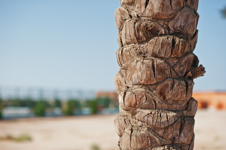 bark palm tree: Close up of palm tree bark background sand