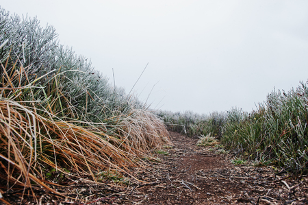 upland: Close up of trail in the mountains with frozen grass