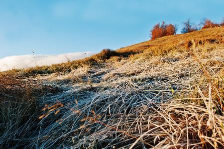 Frozen grass on morning sunrise at Carpathian mountains on autumn. Stock Photo