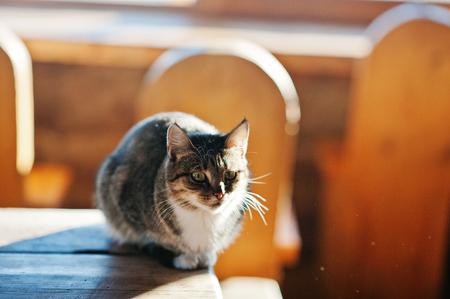 Wild cat sitting on table on sunlight, basking in the sun at frozen morning.