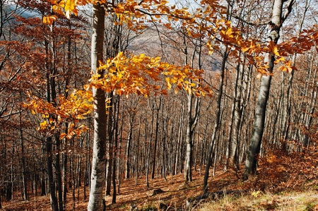Yellow red trees leaves on autumn forest. Colourful wood Stock Photo