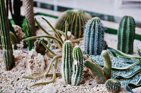 types of cactus: Various types of Cactus in the big hall. Stock Photo