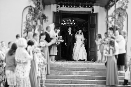 Guests are greeted wedding couple with petals of roses at exit from church. Black and white photo.