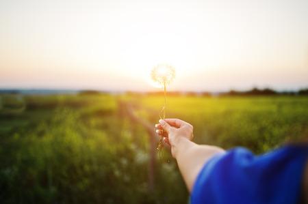 Girl's hand holding a dandelion against sunlight.