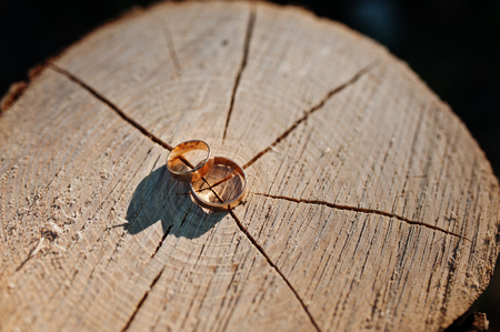 Close-up photo of golden wedding rings laying on the wooden stump.