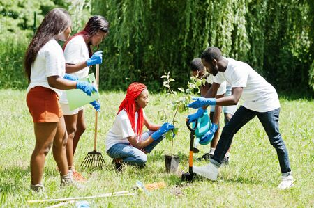 Group of happy african volunteers planting tree in park. Africa volunteering, charity, people and ecology concept. Stock fotó