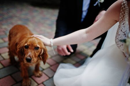 Wedding day. Hands in hands of newlywed couple. Funny dog. Foto de archivo - 134642181