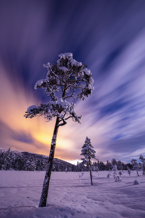 Night in the snowy forest. Norwegian wintertime. Amazing sky and full moon light. Imagens