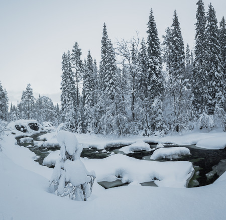 Deep fresh snow in norwegian forest. Boreal landscapes in winter scenery. Geitfjellet area.