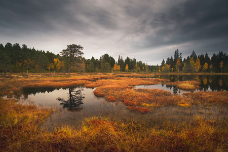 Marshland in norwegian boreal forest near Trondheim, Norway. Area of lake Skjellbreia in Bymarka recreation grounds. Autumnal time. Reklamní fotografie - 118539779