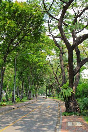 lumpini: Lumpini park in Bangkok