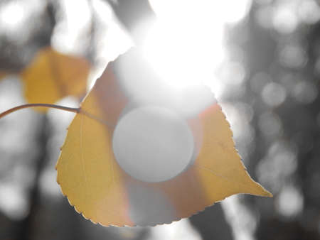 Leaf Banco de Imagens - 24818683