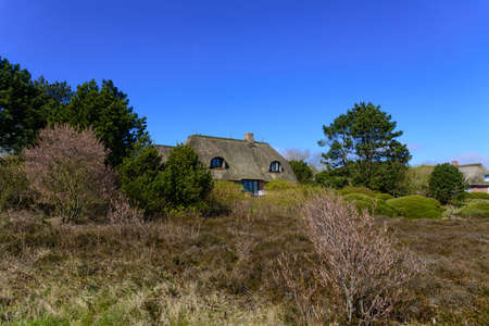 thatched cottage: Thatched cottage in the Braderup Heath
