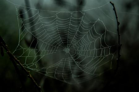dunkles Spinnennetz Standard-Bild