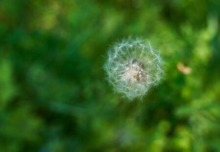 green grassy summer macro Zdjęcie Seryjne