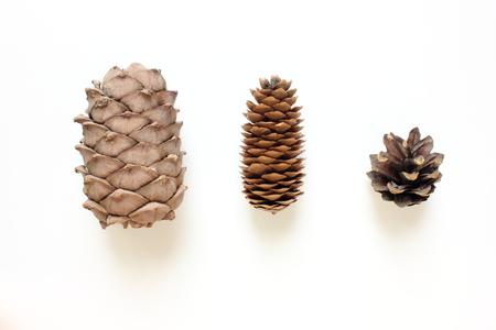 pine three: Three isolated dry cones: cedar, fir and pine. Stock Photo