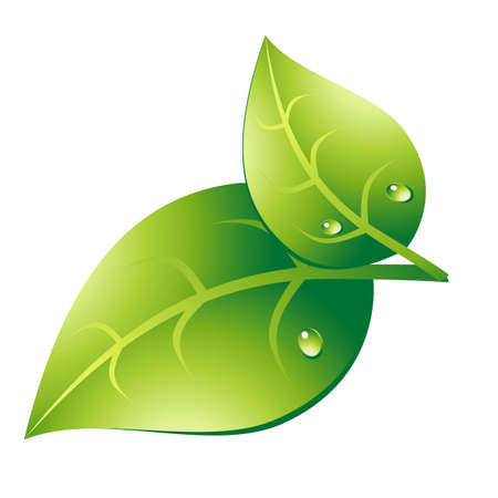Couple green leaf Illustration