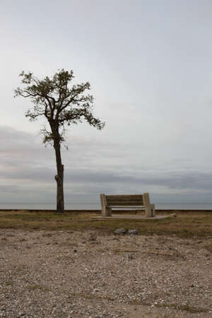 scrawny: Single bench and scrawny tree in urban waterfront park at dusk