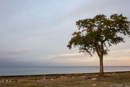 lakefront: Tree silhouette at dusk, New Orleans Lakefront, Lake Pontchartrain