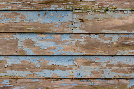 greying: Detailed close view of old, chipping crackled blue paint on wood siding wall