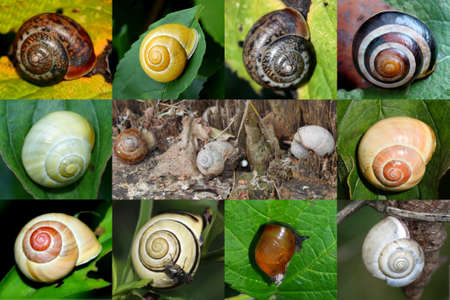 Escargots photo