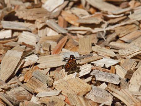 Shredding wood Stock Photo