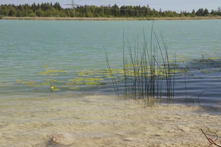 pflanzen: Pflanzen am Ufer