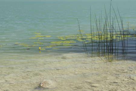 wasser: Pflanzen am Ufer