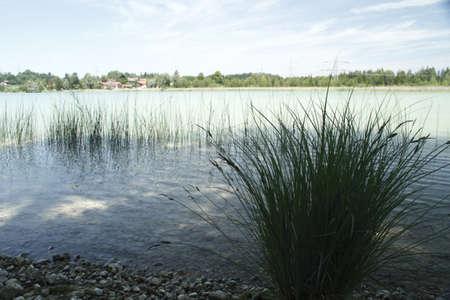 spiegelung: Gras am Ufer Stock Photo