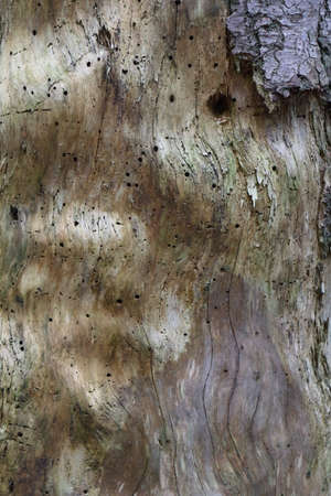 the scars: scars of the wood