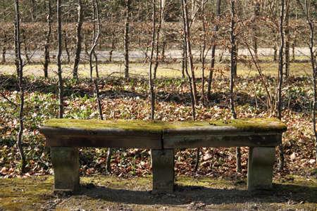 bench park: Park Bench Foto de archivo