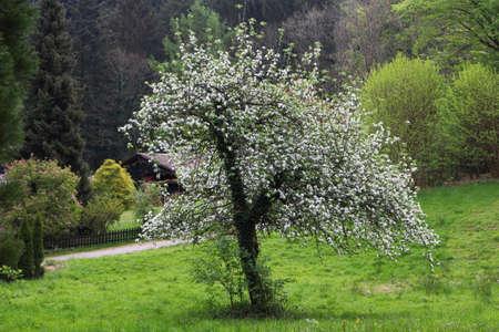 fruit tree: fruit tree