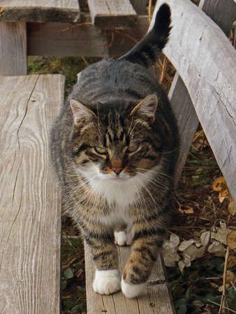 catlike: house cat