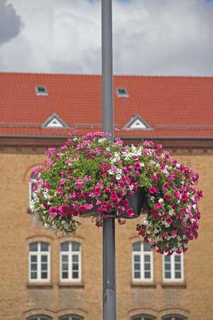 City Flowers Reklamní fotografie
