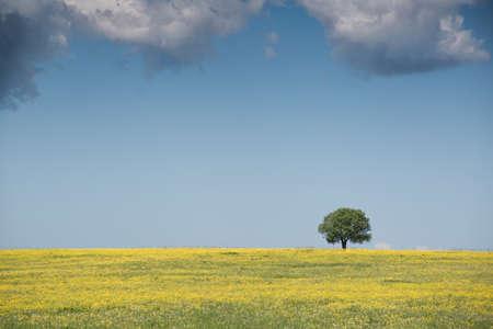 Un arbre dans un champ fleuri Banque d'images - 54980749