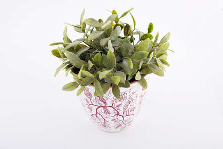 decorative balconies: Pot with green plant