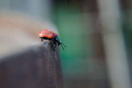 smal: smal red  beetle on the blur background Stock Photo