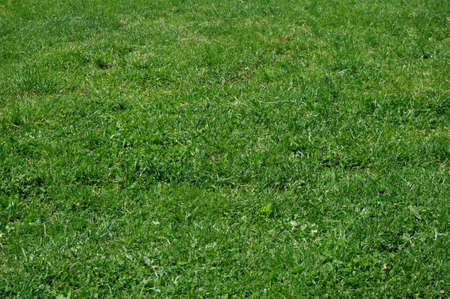 grass grows in park  Stock Photo