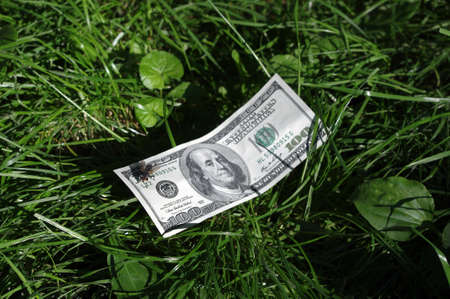Fly on a dollar  banknote, laying in a grass Stock Photo - 14574354