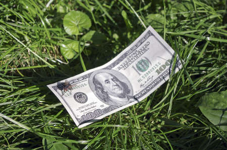 The fly on a dollar  banknote, laying in a grass Stock Photo - 14574412