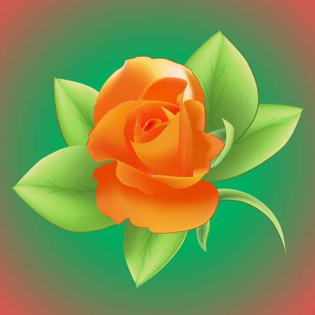 Orange rose on a green background Vector