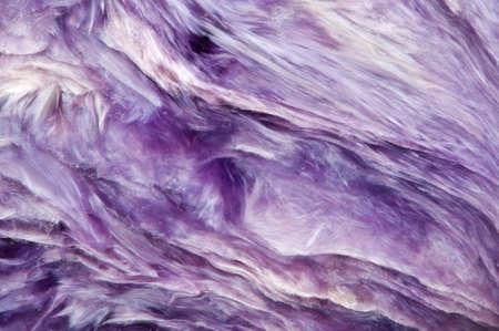 Charoite (Ca, K, Na) 3 Si4O10 (OH, F) H2O. Lila zeldzame kristallen. Macro. Mooie fantastische achtergrond voor een succesvolle zakelijke projecten en andere Uw variant. Stockfoto